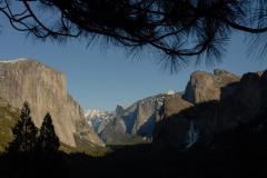 Pines Frame El Capitan and Half Dome || Yosemite NP