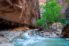 Spring in The Narrows    Zion NP