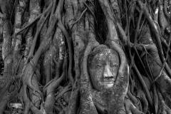 Buddha of Wat Mahathat BW || Ayutthaya