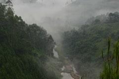 Fog in the Virunga Mountains || Uganda