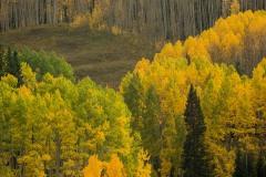 Aspen Hillside || Crested Butte, CO