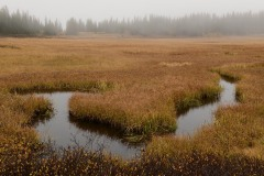 Elk Creek Fog || Crested Butte, CO || Crested Butte, CO