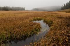 Elk Creek Fog || Crested Butte, CO