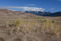Grass in the Dunes || Great Sand Dunes NP