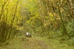 Driving in Golden Fall || Smith River National Recreation Area, California