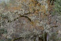 Eight Dollar Mountain Botanical Area || Rogue River-Siskiyou National Forest, Oregon