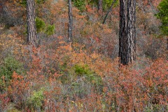 Fall Colors of Eight Dollar Mountain Botanical Area || Rogue River-Siskiyou National Forest, Oregon