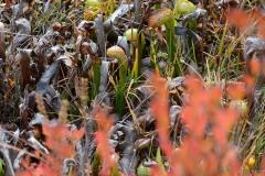 Fen at Eight Dollar Mountain Botanical Area || Rogue River-Siskiyou National Forest, Oregon