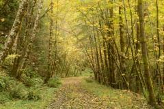 Golden Fall in Smith River National Recreation Area || California