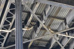 Steel Bridge || Portland