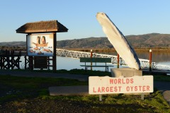 World's Largest Oyster || South Bend, WA