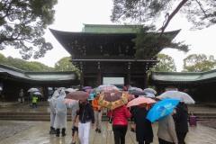 Meiji Shrine || Shibuya, Tokyo