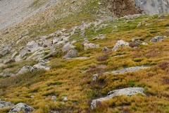 Alpine Ridge to Mt. Harvard || Colorado