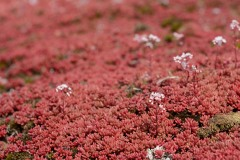 Carpet of Red Moss || Suomenlinna