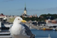 Port of Tallinn || Estonia