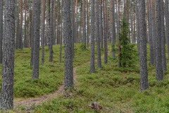 Vaidava Forest || Latvia