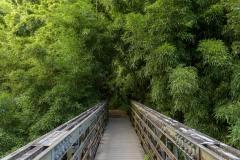 Bridge along Pipiwai Trail || Maui, Hawaii