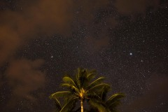 Palms Against the Night Sky || Molokai