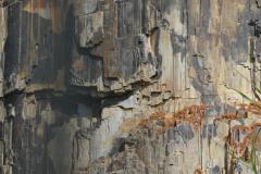 Petrified Tree    Yellowstone NP