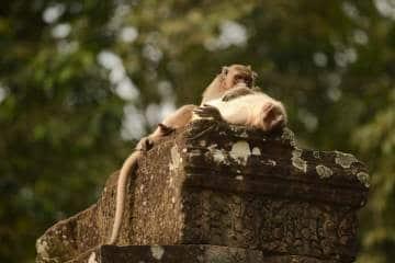 Macaques at Angkor    Siem Reap, Cambodia