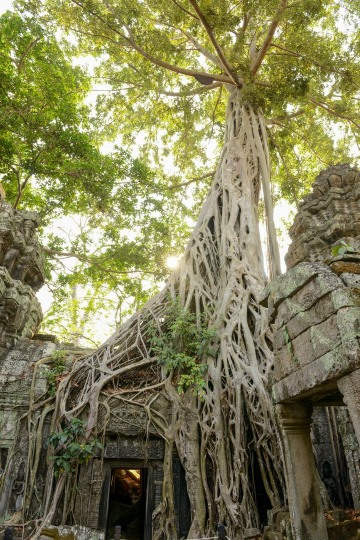 Ta Prohm at Angkor || Siem Reap, Cambodia