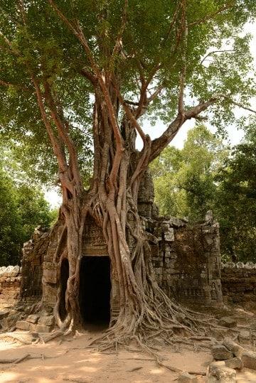 Ta Som at Angkor    Siem Reap, Cambodia