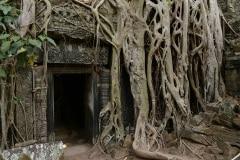 Ta Prohm at Angkor || Siem Reap, Cambodia