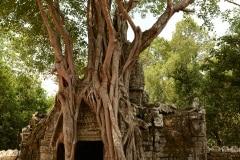 Ta Som at Angkor || Siem Reap, Cambodia