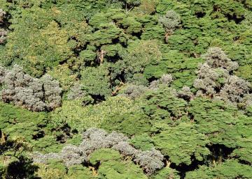 Canopy of Volcán Barú || Panama