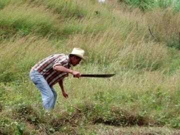Matagalpa Farmer || Nicaragua