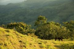 Horse at Cerro Musún || Nicaragua