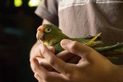 Household Pet || Samulali, Nicaragua