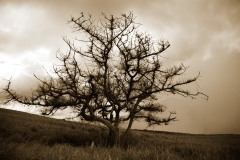 Lonesome Tree || Nicaragua
