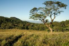 Tree outside Matagalpa || Nicaragua