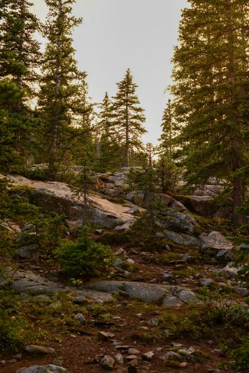 Alpine Forest Sunset || Mt of the Holy Cross, CO