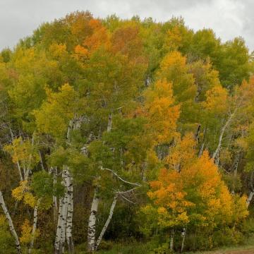 Anthracite Fall || Colorado
