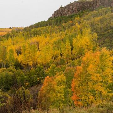 Autumn Splendor    Gunnison National Forest, Colorado