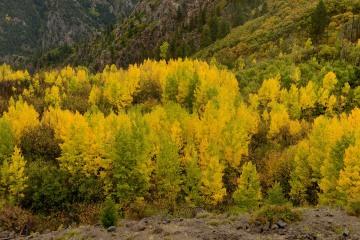 Autumn Splendor || Gunnison National Forest, Colorado