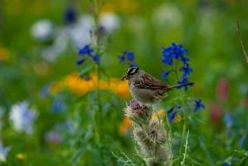 Bird in American Basin || Colorado