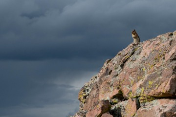 Chipmunk in Storm || Mt of the Holy Cross, CO