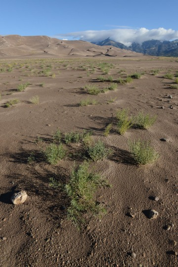 Dunes & Grass    Great Sand Dunes NP, CO