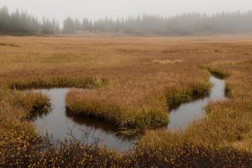 Elk Creek Fog    Crested Butte, CO    Crested Butte, CO