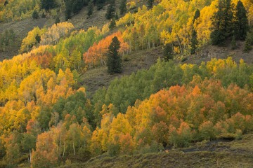 Fall Colors Pop || Crested Butte, CO