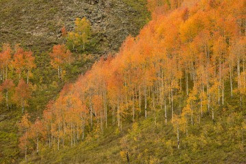 Fall Colors of Red Lady Basin    Crested Butte, CO