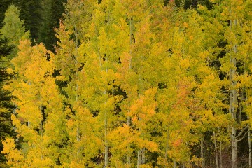 Fall Glory || Crested Butte, CO