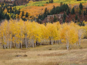 Fall in Chama Valley || New Mexico