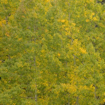 First Signs of Fall || Crested Butte, CO