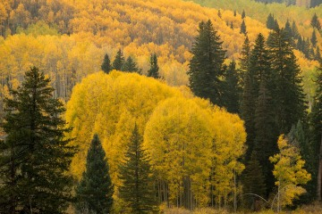 Gloden Fall Color || Crested Butte, CO