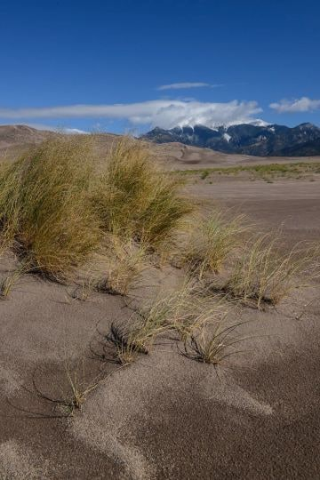 Grass on the Dunes || Great Sand Dunes NP, CO