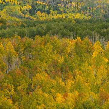 Gunnison National Forest in Fall    Colorado
